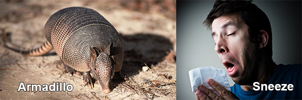 Armadillo, man sneezing